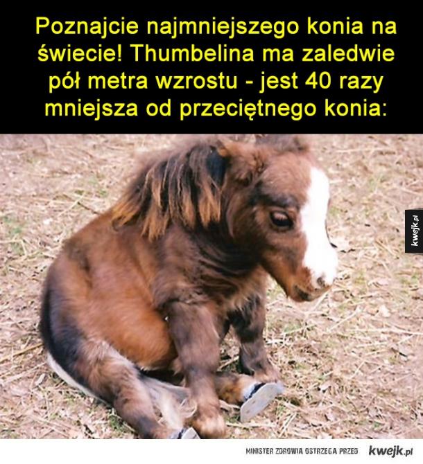Najmniejszy koń na świecie