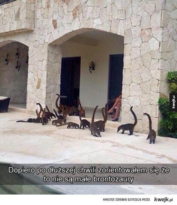 Dinozaury pod domem