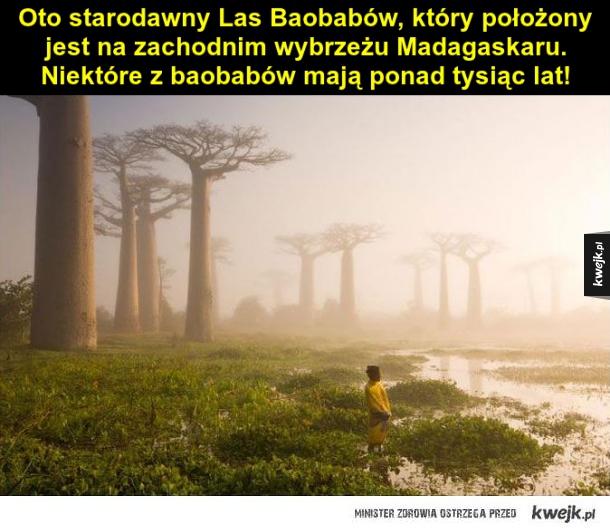Las Baobabów
