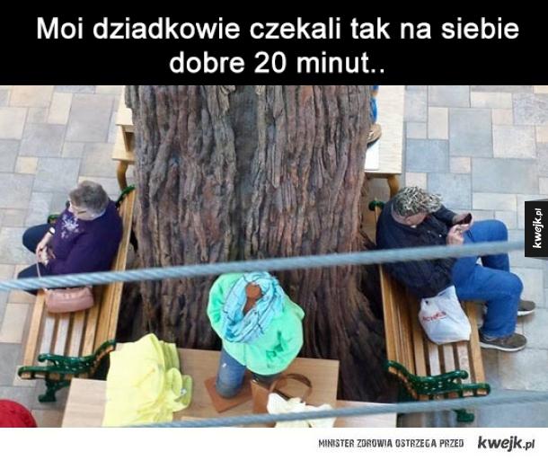 Spotkajmy się pod drzewem