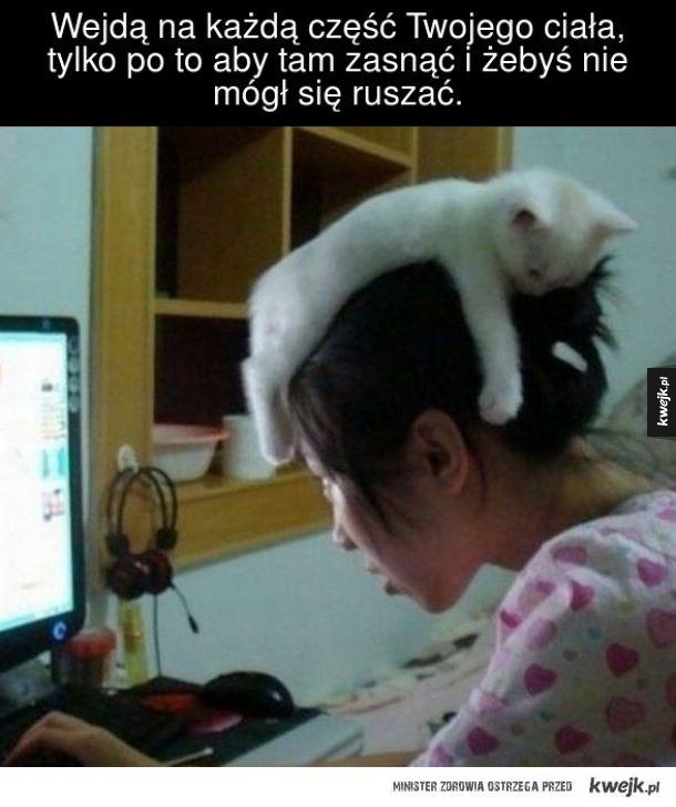 Wkurzające zachowania kotów