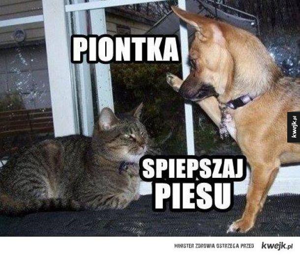 Koty i psy...