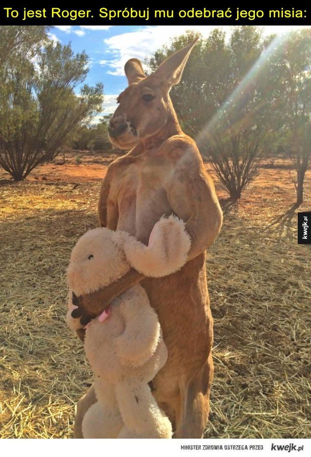 Kangur Roger