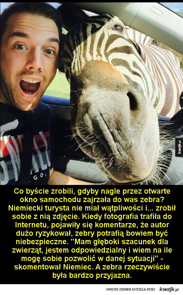 No cześć - Co byście zrobili, gdyby nagle przez otwarte okno samochodu zajrzała do was zebra? Niemiecki turysta nie miał wątpliwości i... zrobił sobie z nią zdjęcie. Kiedy fotografia trafiła do Internetu, pojawiły się komentarze, że autor dużo ryzykował, zebry potraf