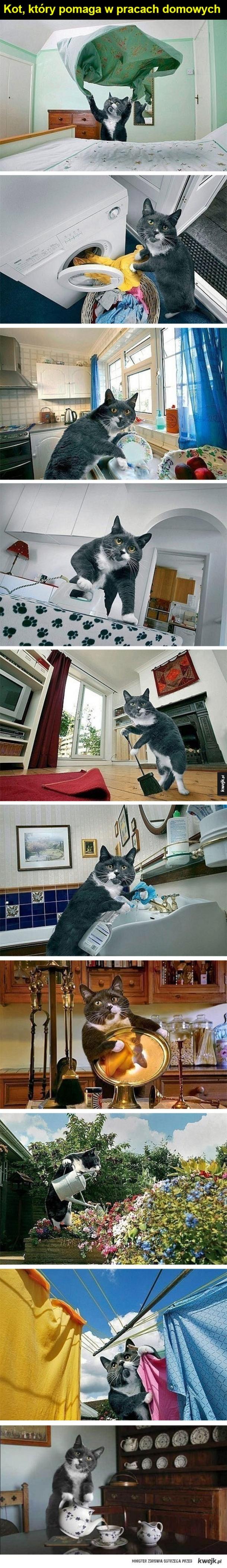 Pomocny koteł - Kot, który pomaga w pracach domowych