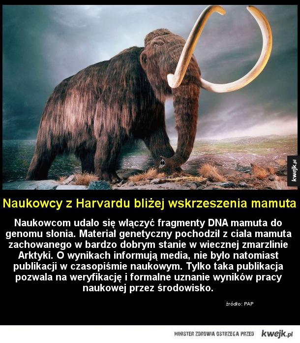 Naukowcy z Harvardu bliżej wskrzeszenia mamuta