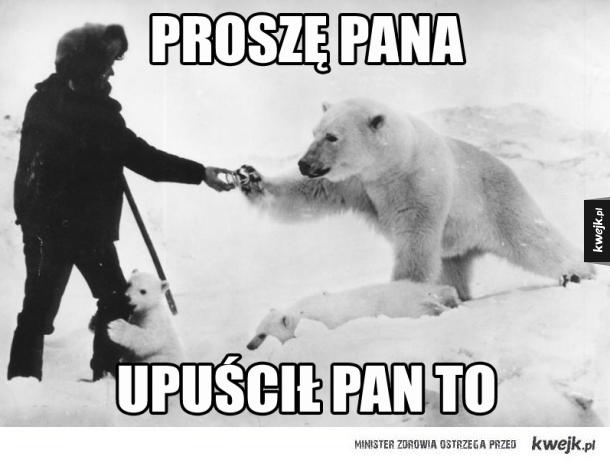 Misie polarne takie są