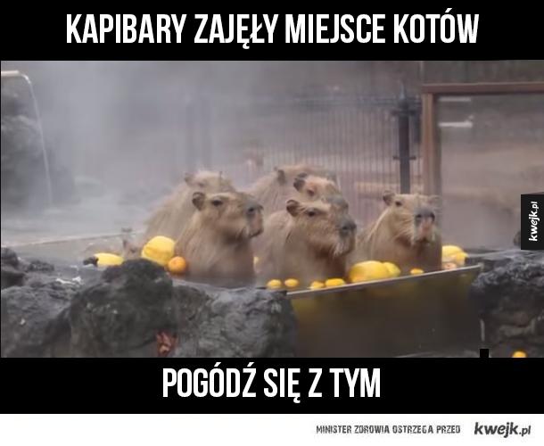 Kapibary nowymi kotami internetu