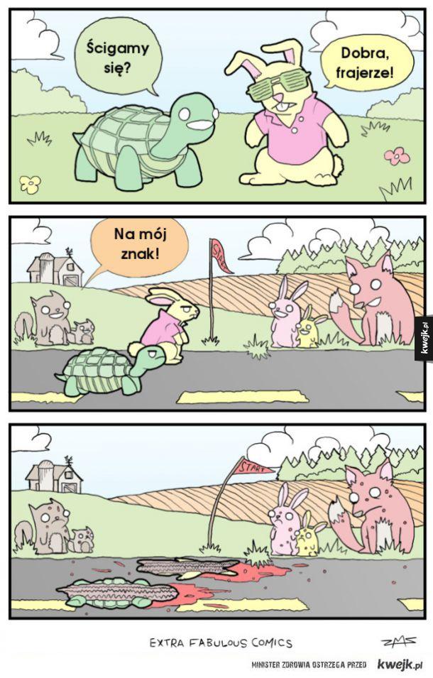 Żółw i zając - prawdziwa historia
