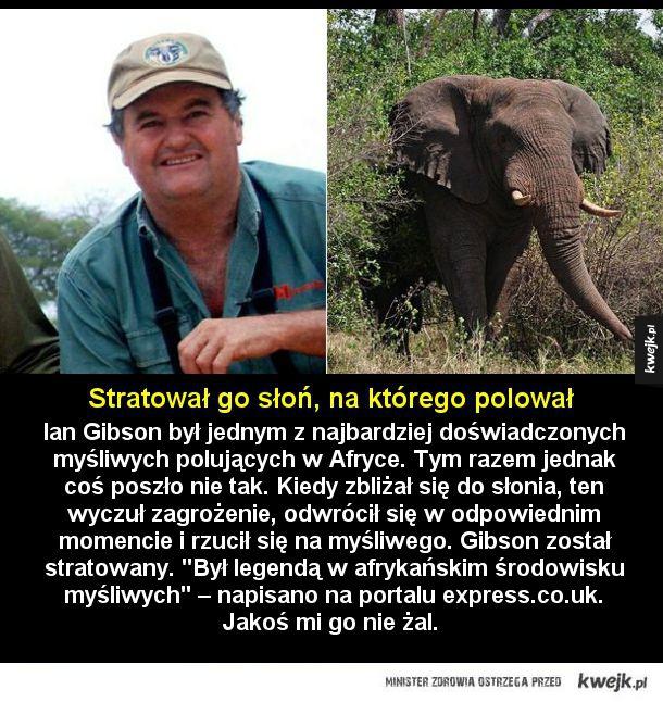 Zapolował na myśliwego - Ian Gibson był jednym z najbardziej doświadczonych myśliwych polujących w Afryce. Tym razem jednak coś poszło nie tak. Kiedy zbliżał się do słonia, ten wyczuł zagrożenie, odwrócił się w odpowiednim momencie i rzucił się na myśliwego. Gibson został stratowa