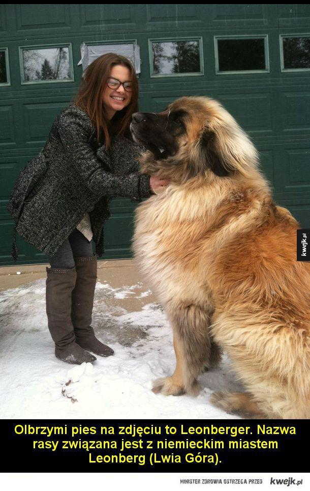Zwierzęta, które udowadniają, że rozmiar ma znaczenie