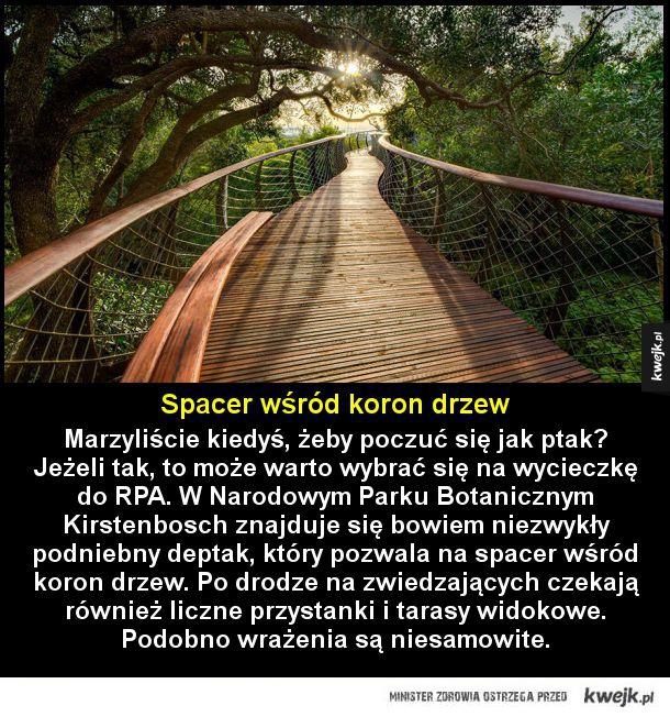 Spacer po niebie - Spacer wśród koron drzew  Marzyliście kiedyś, żeby poczuć się jak ptak? Jeżeli tak, to może warto wybrać się na wycieczkę do RPA. W Narodowym Parku Botanicznym Kirstenbosch znajduje się bowiem niezwykły podniebny deptak, który pozwala na spacer wśród koron