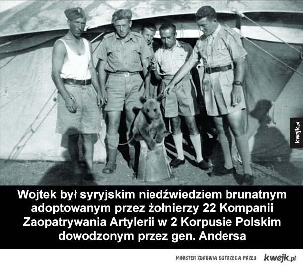Historia kaprala Wojtka - Wojtek był syryjskim niedźwiedziem brunatnym adoptowanym przez żołnierzy 22 Kompanii Zaopatrywania Artylerii w 2 Korpusie Polskim dowodzonym przez gen. Andersa