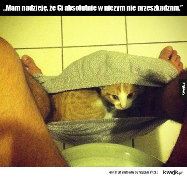 """Dowody na to, że to nie Ty jesteś właścicielem kota, lecz kot jest Twoim - """"Mam nadzieję, że Ci absolutnie w niczym nie przeszkadzam."""""""