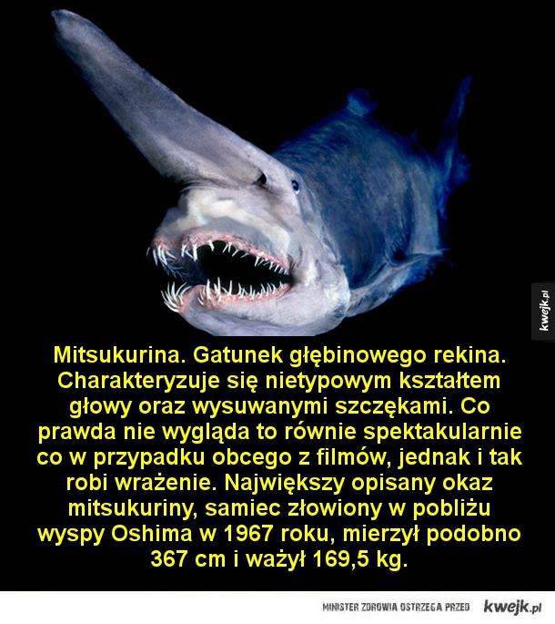 Potwory żyjące w morskich głębinach - Mitsukurina. Gatunek głębinowego rekina. Charakteryzuje się nietypowym kształtem głowy oraz wysuwanymi szczękami. Co prawda nie wygląda to równie spektakularnie co w przypadku obcego z filmów, jednak i tak robi wrażenie. Największy opisany okaz mitsukuriny