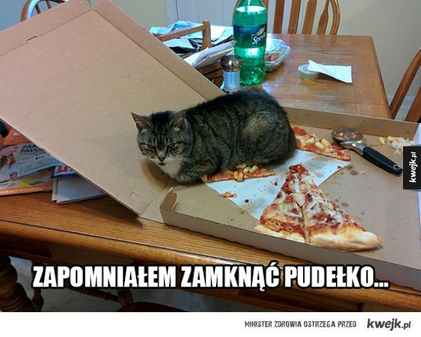 Koty kochają wszystkie pudełka