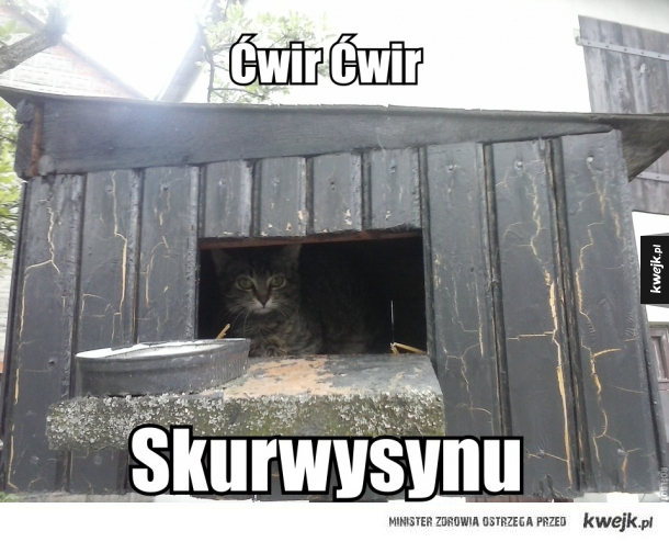 Kot po obiedzie