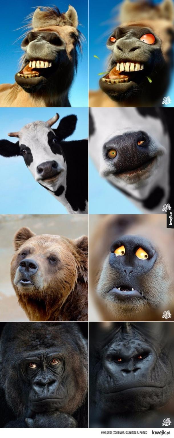 Zwierz ze zwierza