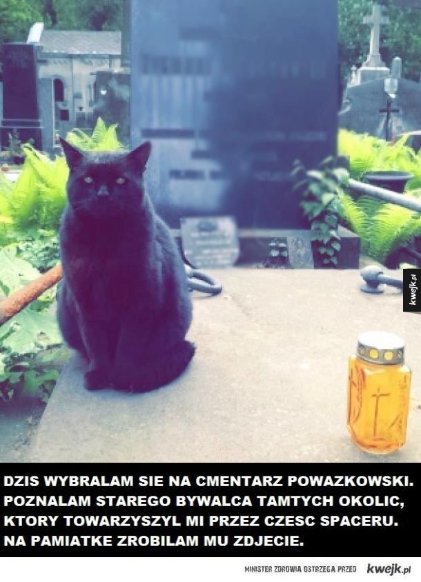Kot z Cmentarza