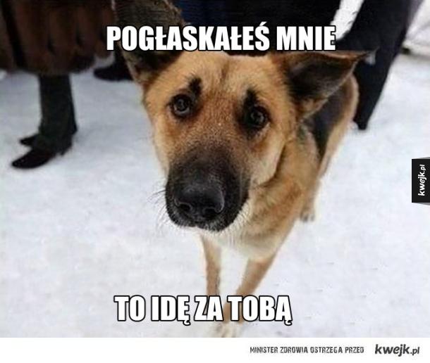 Logika psa