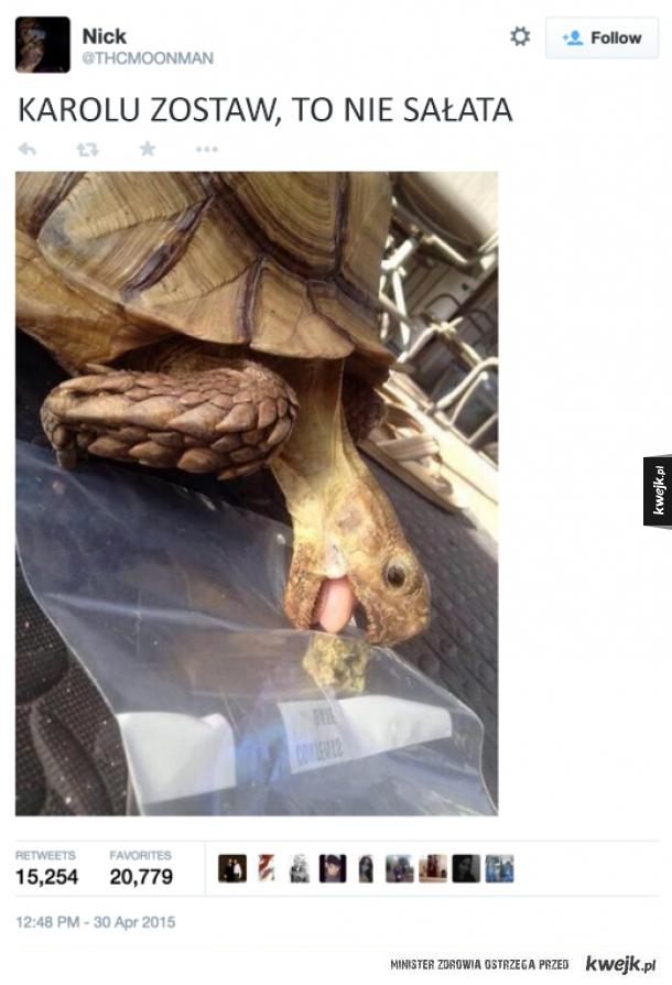 Żółw Karol