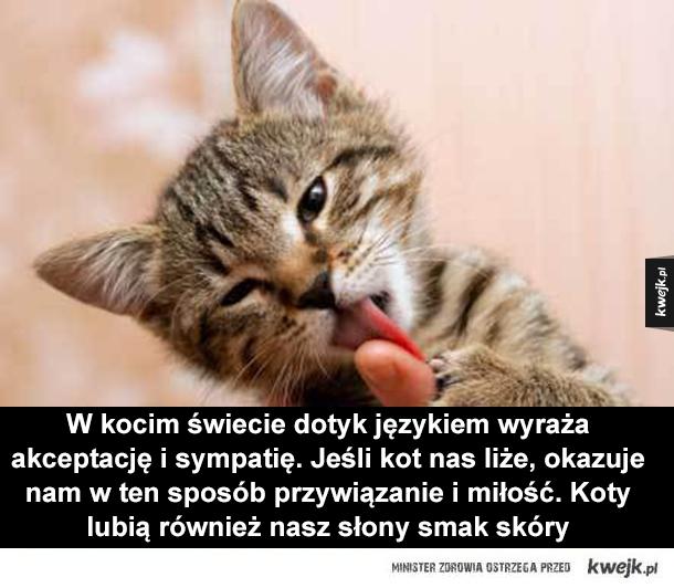 Ciekawostki o kotach - Dlaczego koty uwielbiają pudełka? Koty uwielbiają się chować, jest to dla nich znakomity sposób na uspokojenie się. Poza tym pudełka pomagają kotom zwinąć się w kulkę, ogrzać się i utrzymać odpowiednią temperaturę ciała
