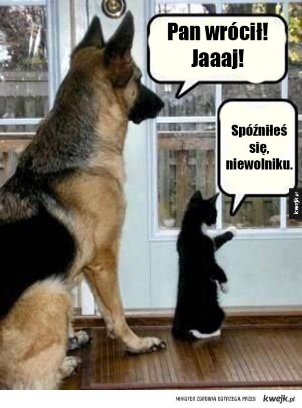 Pies I Kot Ministerstwo śmiesznych Obrazków Kwejkpl