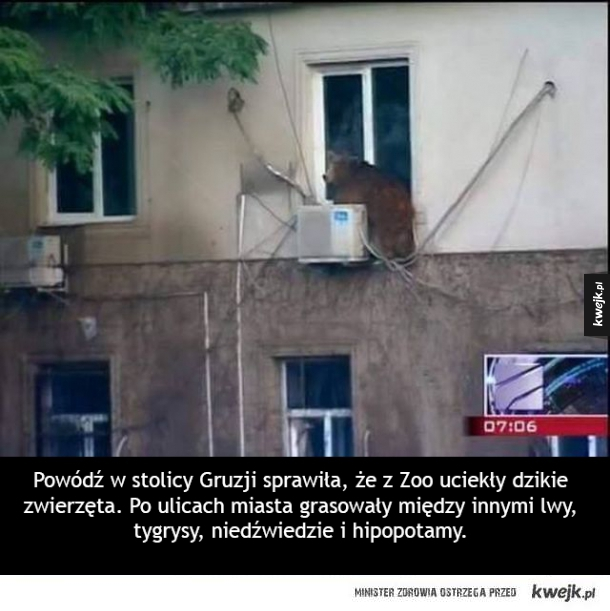 Z Zoo w Tbilisi uciekły zwierzęta...