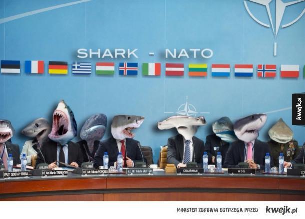 Shark-nato