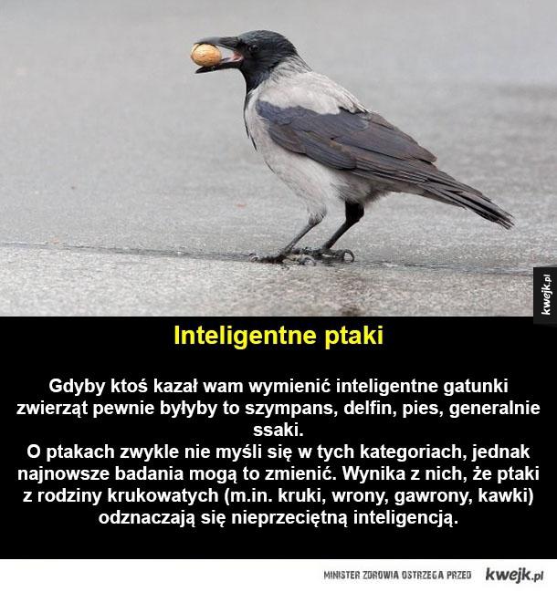 Niesamowite ptaki