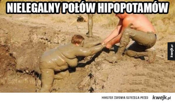 Ratujmy hipopotamy