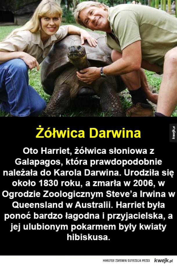 Szkoda, że żółwie nie potrafią mówić...