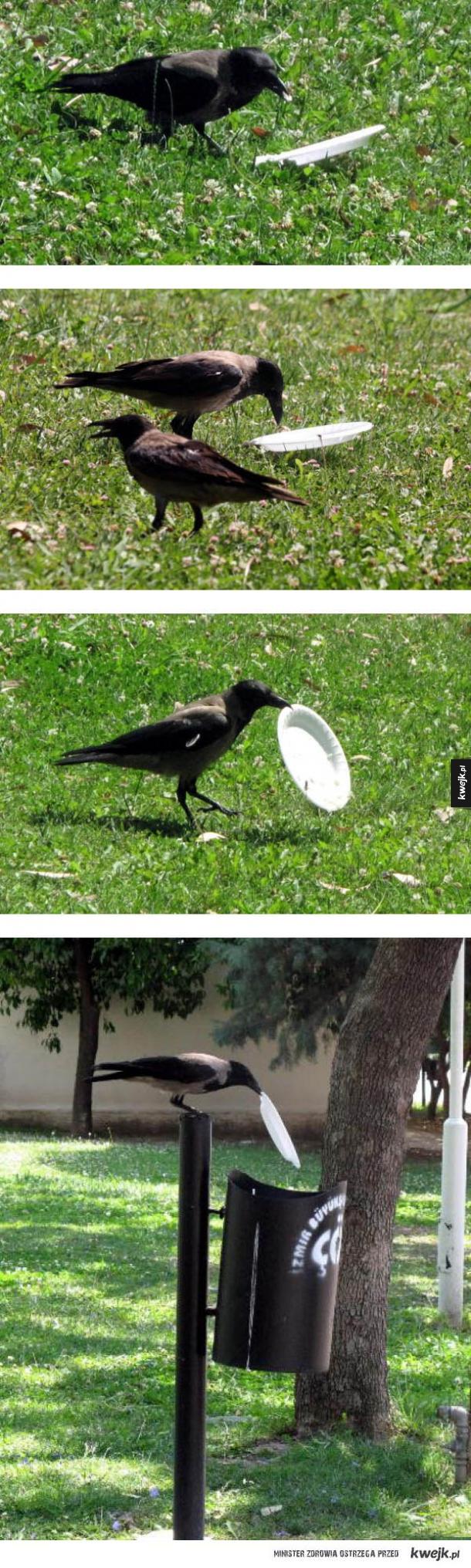 Kulturalny ptak