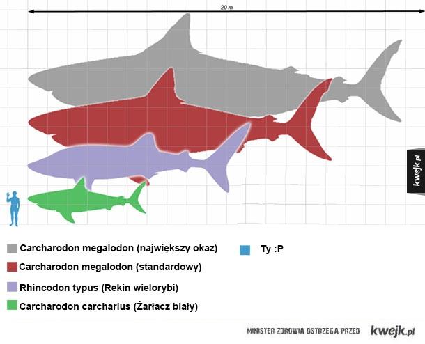 Prehistoryczne rekiny