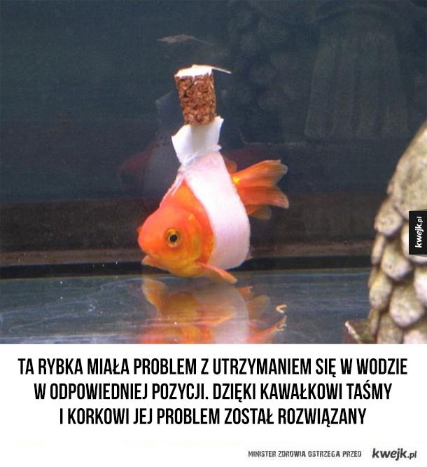 Naprawiona rybka
