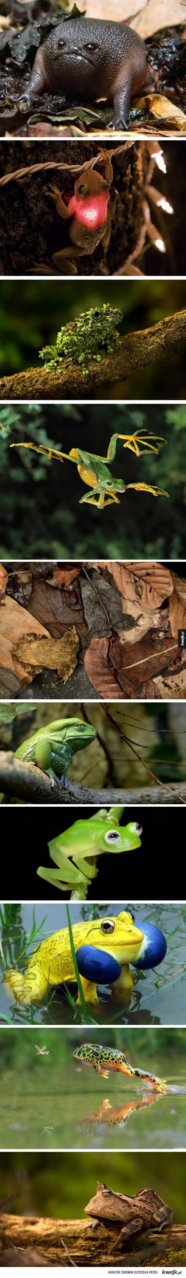 Niezwykłe żaby