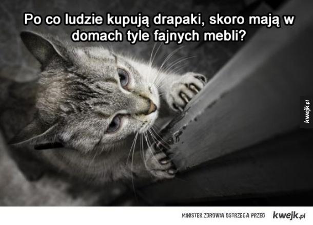 Przemyślenia kotów