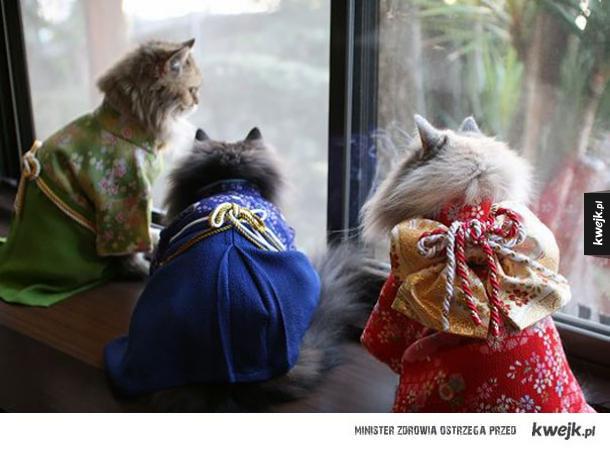 Koty w kimonach