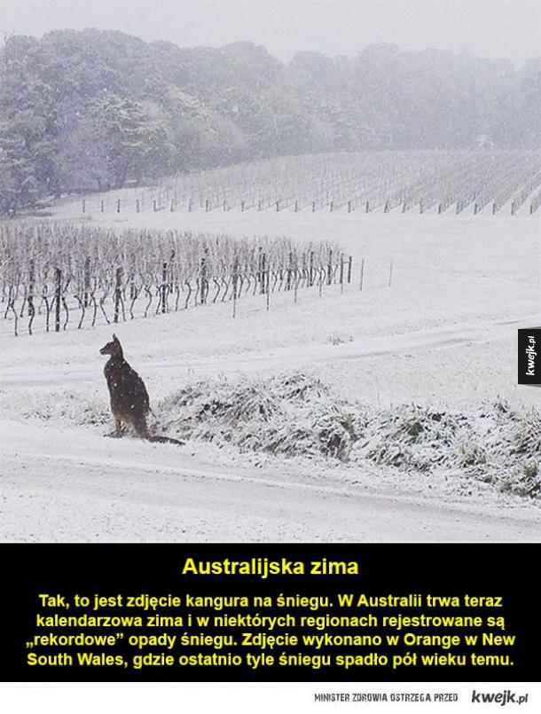 Kangur nie ogarnia