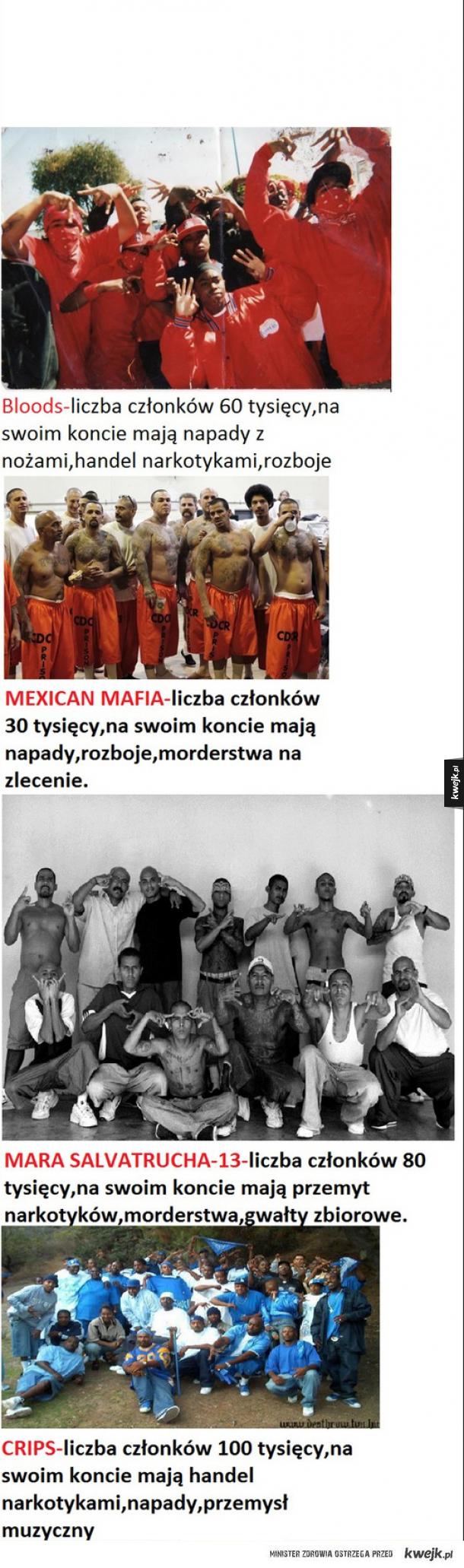 To są prawdziwe gangi, a nie jakieś Gangi albanii