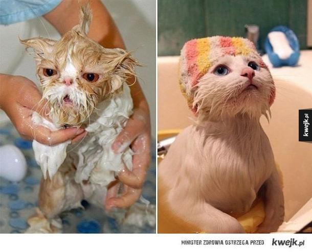 Koty w kąpieli czyli armagedon jest blisko
