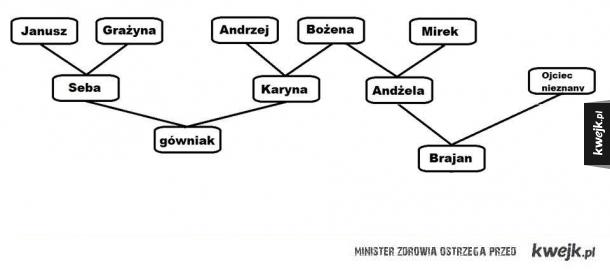 Drzewo genealogiczne przeciętnej polskiej rodziny