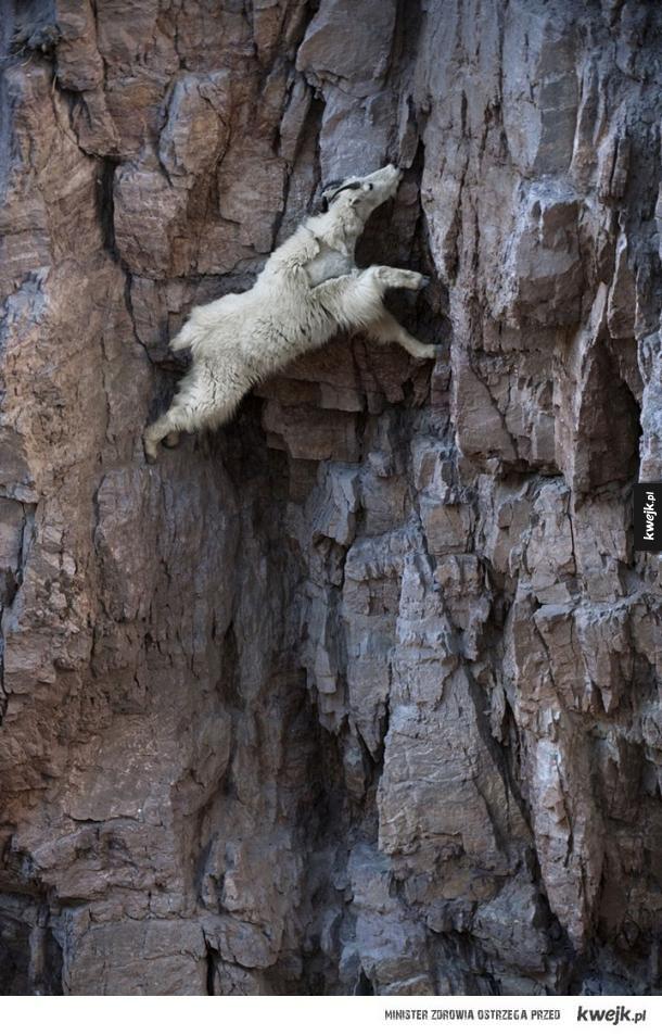 Zwierzęta, które zawstydziłyby niejednego profesjonalnego wspinacza