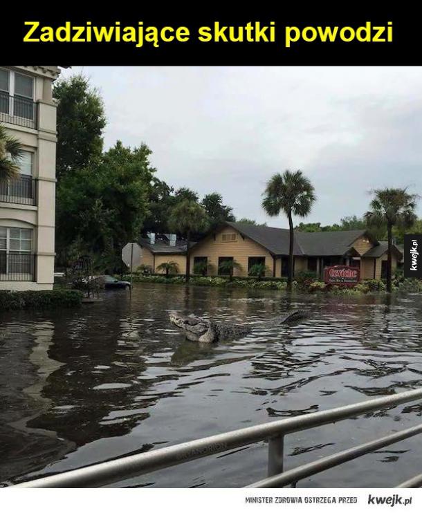 Powódz