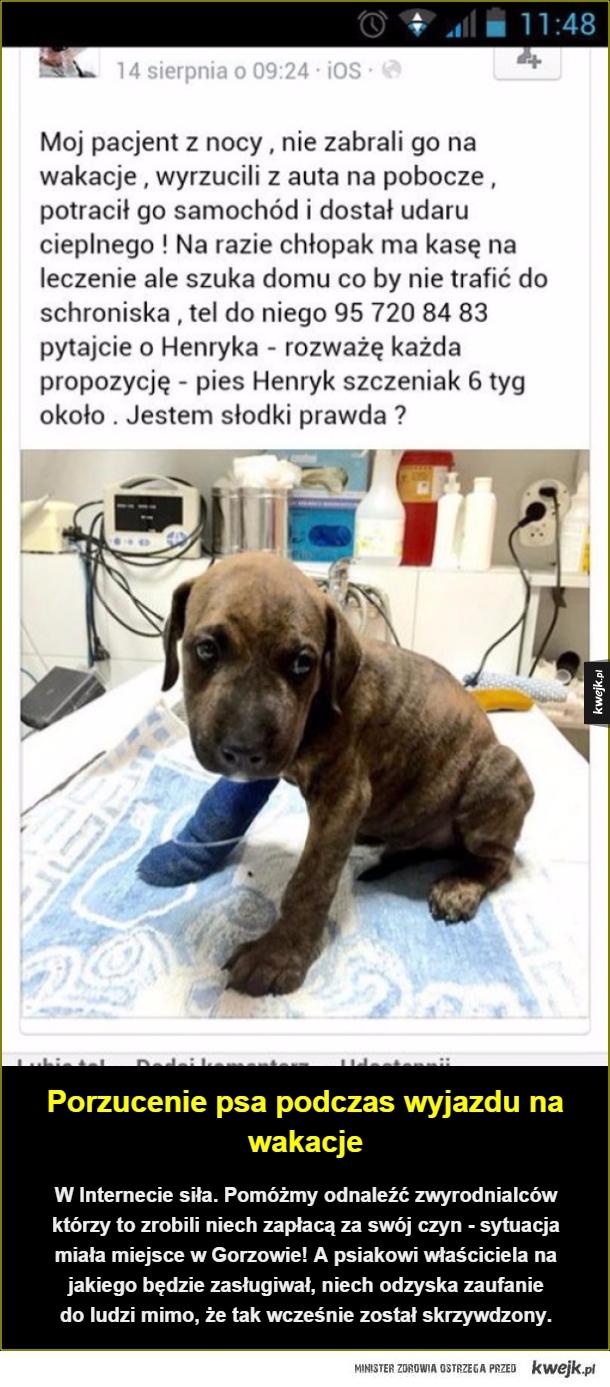 Porzucenie psa