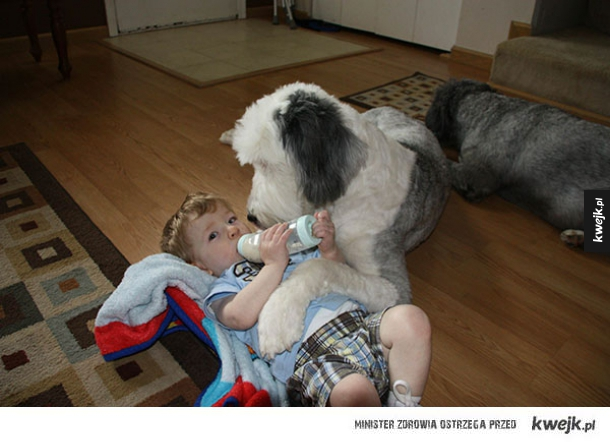 Pieseł babysitter