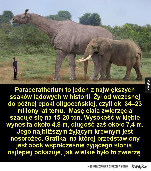 Największe wymarłe ssaki