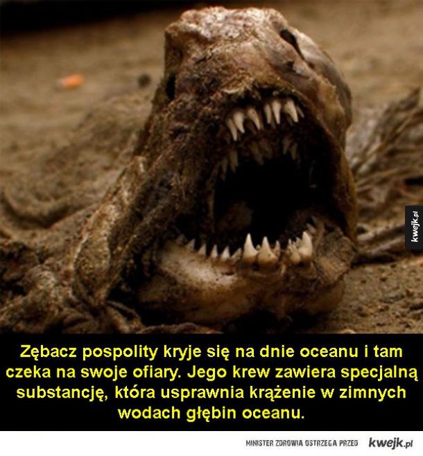 Najbardziej przerażające i obrzydliwe zwierzęta