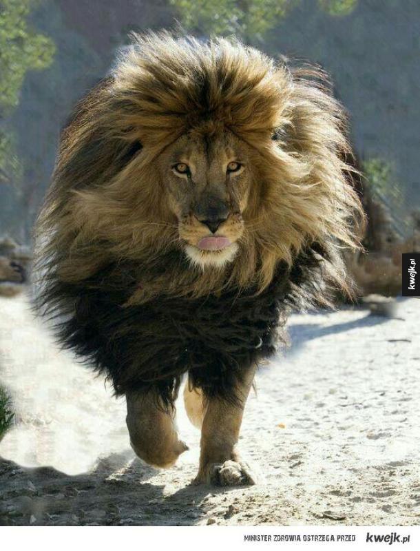 Król w pełni majestatu
