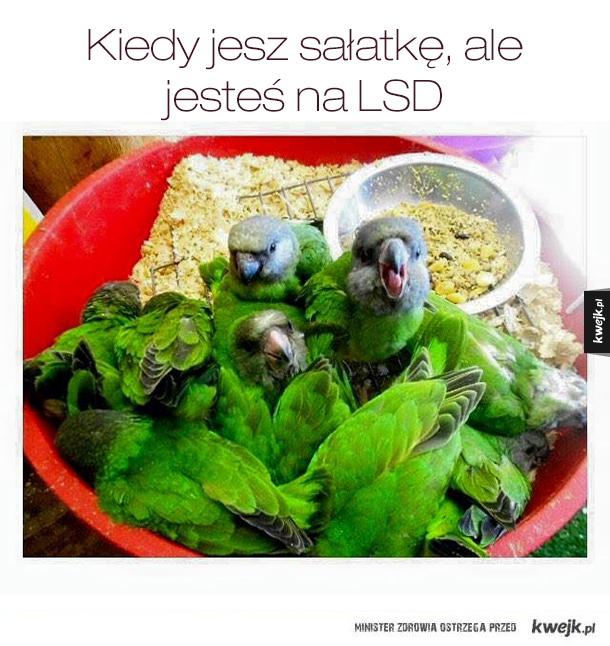 Jedzenie sałatki na lsd
